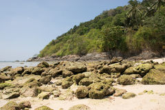 Stenig strand med skogen på en kulle i bakgrunden Fotografering för Bildbyråer