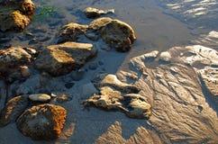 Stenig strand på lågvatten i Laguna Beach, Kalifornien Arkivfoton