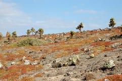 Stenig terrain i de Galapagos öarna royaltyfria bilder