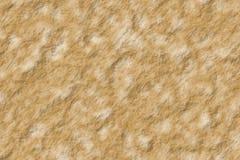 Stenig textur Royaltyfria Bilder