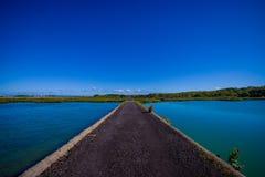 Stenig väg i den Rangitoto ön i Auckland, i en solig dag med en härlig blå himmel som korsar havet Arkivbilder