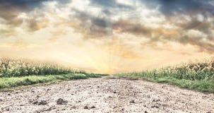 Stenig väg i fält på solnedgången, landskap Arkivbilder