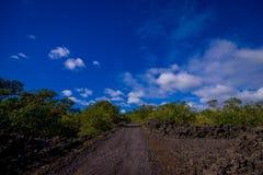 Stenig väg inom av den Rangitoto ön i Auckland, i en solig dag med en härlig blå himmel Royaltyfria Foton