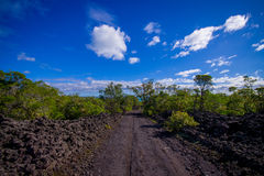 Stenig väg inom av den Rangitoto ön i Auckland, i en solig dag med en härlig blå himmel Arkivfoto