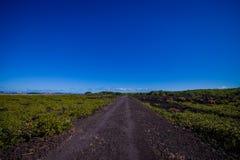 Stenig väg inom av den Rangitoto ön i Auckland, i en solig dag med en härlig blå himmel Arkivfoton