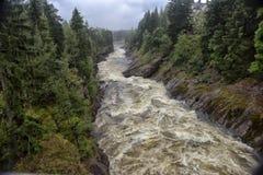 stenig vuoksi för forntida för gruppfinland skog flod för imatra Flod Vuoksa royaltyfri fotografi