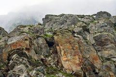 Steniga berg av Rumänien Royaltyfri Fotografi