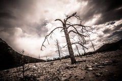 Steniga berg för kal himmel för träd illavarslande arkivfoto