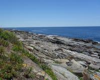 Steniga havkust- och havsväxter, uttålighet, styrka arkivbild