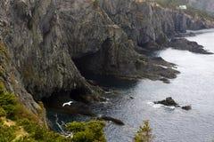 Steniga klippor med seagullen Arkivbild