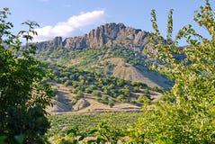 Stenigt berg med enkla buskar på en lutning och ett grönt fält av druvor i dalen Royaltyfri Fotografi
