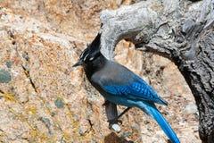stenigt blått berg för fågel royaltyfria foton