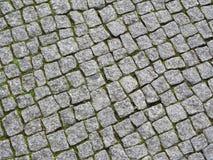 Stenläggningstenar med Moss In The Gaps, bakgrund arkivfoton