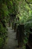 Stenlagd bana i en skog med frodig vegetation Arkivbilder