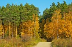 Stenlagd bana i höstskogen Arkivbild