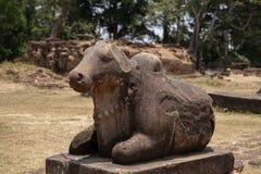 Stenmonument för forntida tempel i det Angkor Wat komplexet, Cambodja Nandi ko eller tjurstaty Skulptur för hinduisk tempel royaltyfri bild
