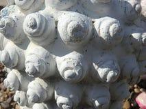 Stennoduler Arkivbilder