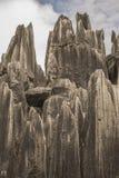 Stenskogen vaggar 2 Arkivbilder