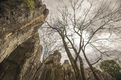 Stenskogträd Royaltyfri Bild