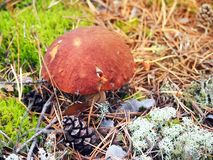 Stensopp i höstskognärbild Färgrikt säsongsbetonat begrepp tonat arkivfoton