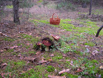 Stensoppet i skogen Royaltyfri Fotografi