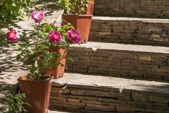 Stenstegen dekorerade vid blomkrukor med röda rosor Arkivbild