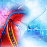 Stent血管成形术 库存图片