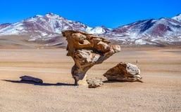 Stenträdet, Eduardo Avaroa Andean Fauna National reserv, Bolivia Arkivbild