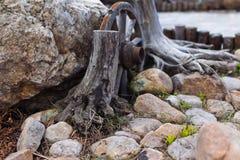 Stenträdgård Royaltyfri Foto