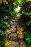 Stentrappa i regnskog Arkivbild