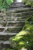 Stentrappa i skogen fotografering för bildbyråer