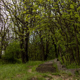 Stentrappa i skogen Arkivfoto
