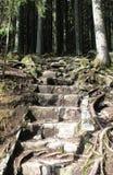Stentrappa i skogen Arkivbild