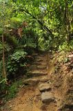 Stentrappa på vandringsledet i buske Fotografering för Bildbyråer