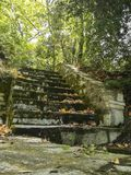Stentrappa som leder i skogen arkivbild