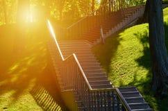 Stentrappan i en parkera omgav växter med solljus Royaltyfri Fotografi