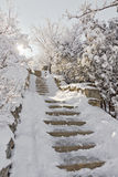 Stentrappuppgång i snön. Fotografering för Bildbyråer