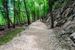 Stenväg i skog Arkivfoton