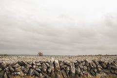 Stenvägg i Clare royaltyfri foto