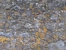Stenvägg med mossa Royaltyfria Bilder