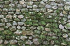 Stenvägg med mossa Arkivbilder