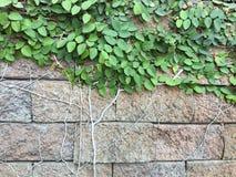 Stenvägg med naturen Royaltyfri Bild