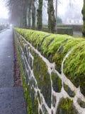Stenvägg som täckas i mossa i Milngavie, Glasgow Royaltyfri Bild
