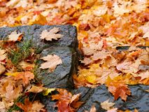 Step in autumn Royalty Free Stock Images