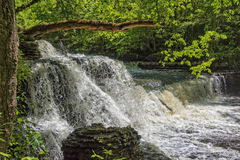 Free Step Falls At Old Stone State Park In Tennessee Royalty Free Stock Photography - 93169597