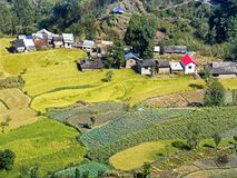 The different shades of green in the Himachal Prades,. The step farming and different shades of green made the village in Himachal Pradesh stand out royalty free stock photos