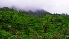 Step Farming in Himalayan Mountains in Uttarakhand, India Stock Photos