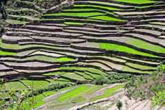 Step farming in the uttaranchal Himalayas India. Step farming technique in indian Himalayan region farmland and hills Stock Image