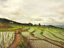Step Field. Field In Chiangmai Royalty Free Stock Images