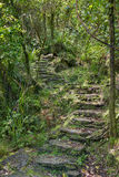 Step into the forest. A photo of romantic steps on a bush walk on the South island of New Zealand Stock Images